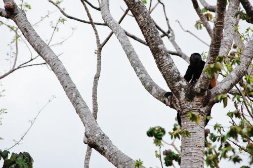 monkey in crook of tree